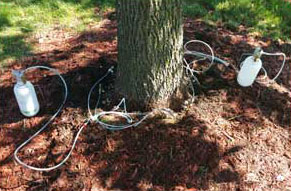 Emerald Ash Borer Treatment Process